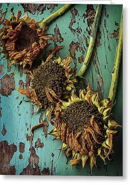 Three Dried Sunflowers Greeting Card by Garry Gay