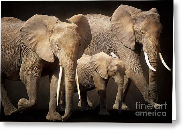 Three Elephants Greeting Card by Angela Doelling AD DESIGN Photo and PhotoArt