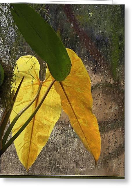 Greeting Card featuring the photograph Three Exotic Leaves by Viktor Savchenko