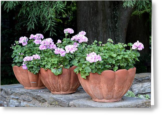 Greeting Card featuring the photograph Three Flower Pots by Deborah  Crew-Johnson