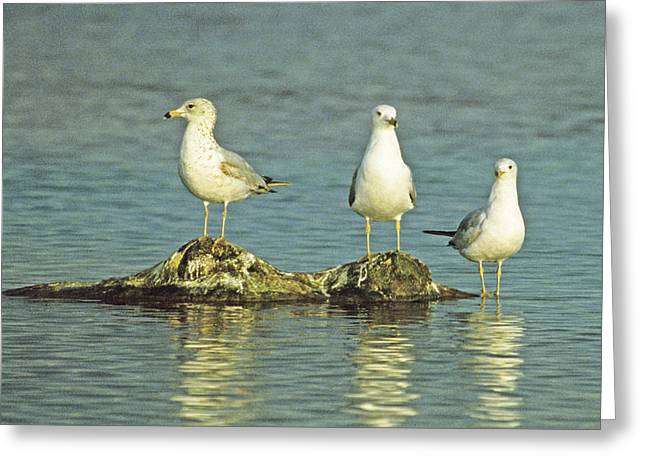 Three Friends Greeting Card by Bruce Gilbert