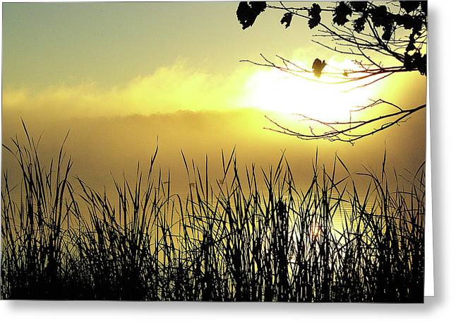 Three Geese At Sunrise Greeting Card by Paul Wash