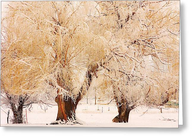 Three Golden Frosted Trees Greeting Card