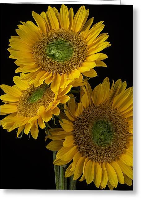 Three Golden Sunflowers Greeting Card by Garry Gay
