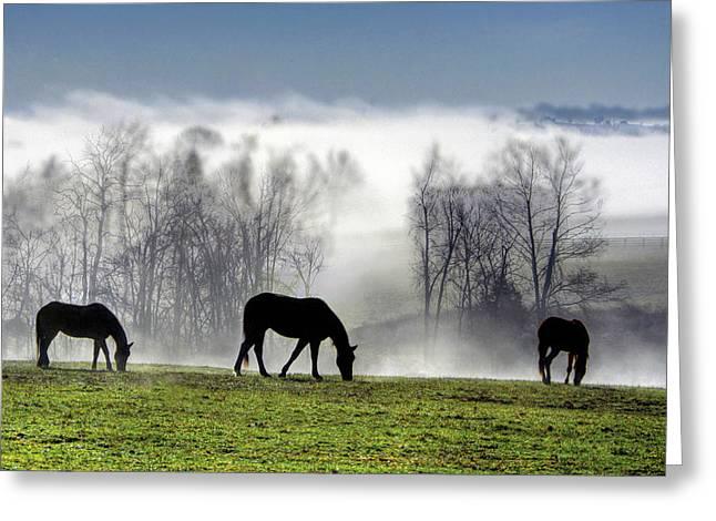 Three Horse Morning Greeting Card