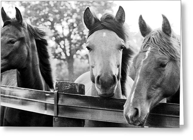 Three Horses Greeting Card by Brian Foxx
