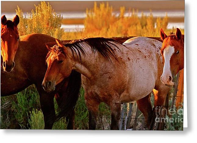 Three Horses Of A Suspicious Corral Greeting Card by Gus McCrea