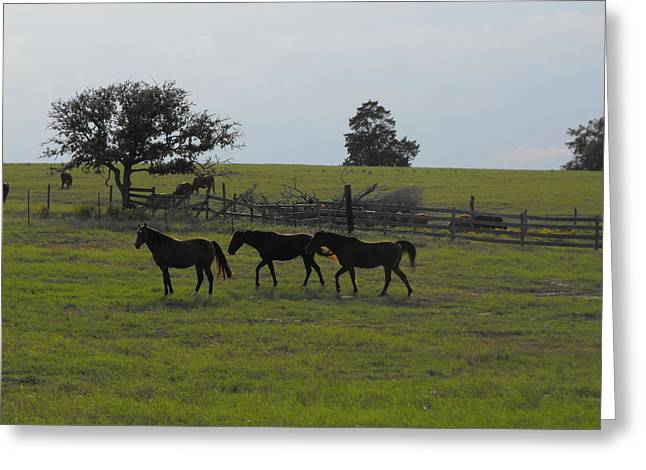 Three Horses Greeting Card by Rebecca Cearley