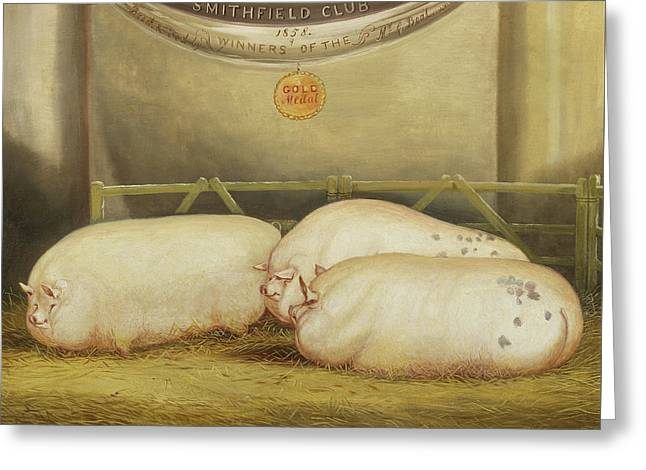 Three Improved Leicesters In A Pen At 1858 Smithfield Club Christmas Show Greeting Card by John Vine