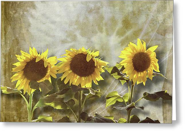 Three In The Sun Greeting Card