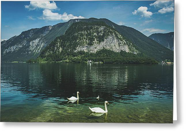 Three Lake Hallstatt Swans Greeting Card