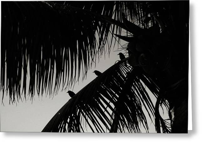 Three Little Birdies Greeting Card by JAMART Photography