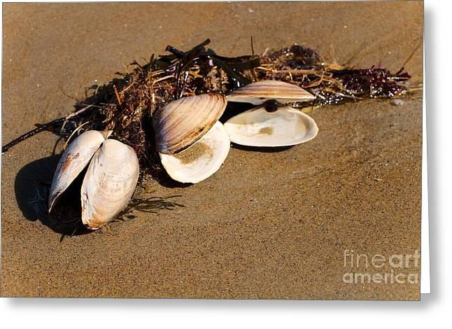 Three Little Shells Greeting Card by Elizabeth Dow