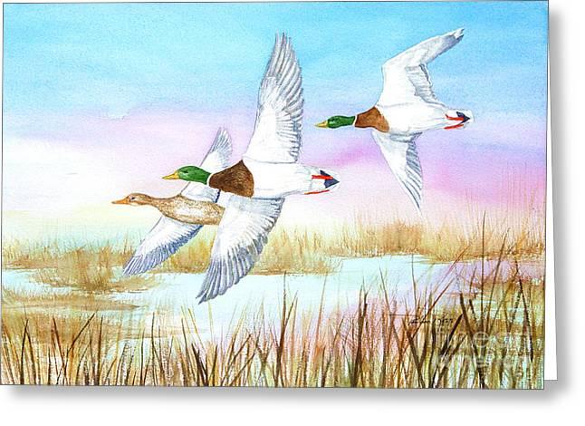 Three Mallards Greeting Card by Pauline Ross