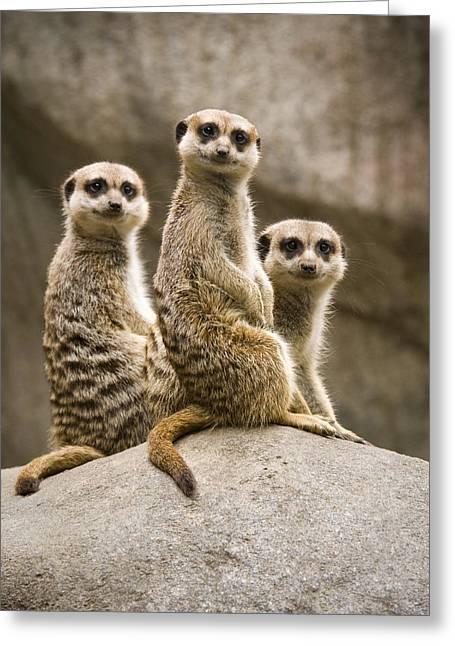 Three Meerkats Greeting Card