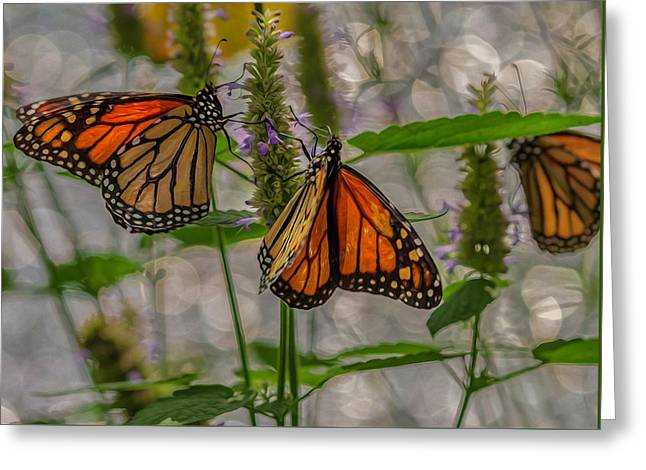 Three Monarch Butterfly Greeting Card