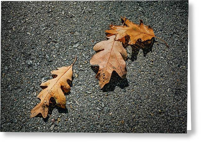 Three Oak Leaves Greeting Card by Scott Norris