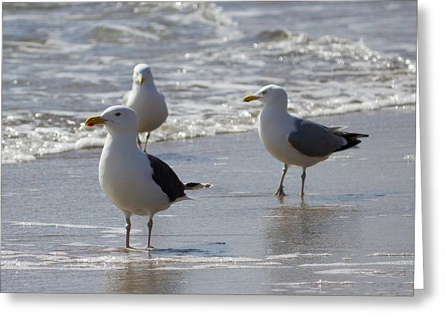 Three Of A Kind - Seagulls Greeting Card