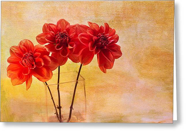 Dahlia Greeting Cards - Three Orange Dahlias Greeting Card by Rebecca Cozart