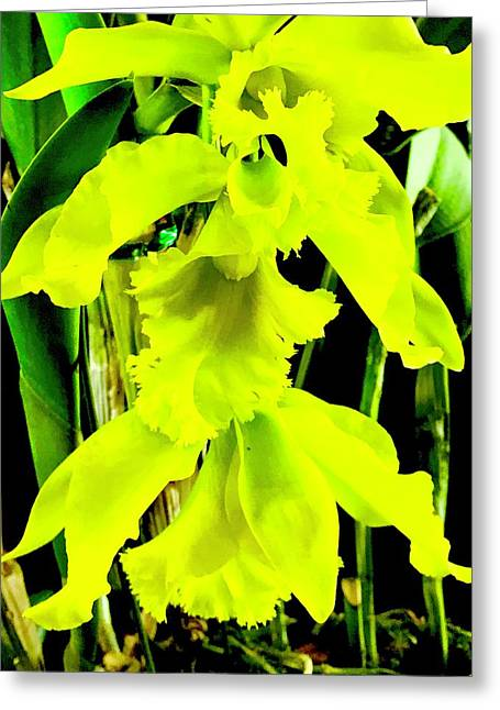 Three Orchids In Yellow Greeting Card