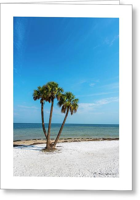 Three Palms Greeting Card by Marvin Spates