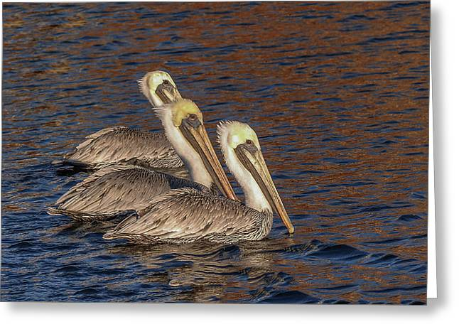 Three Pelicans Greeting Card by Connie Mitchell