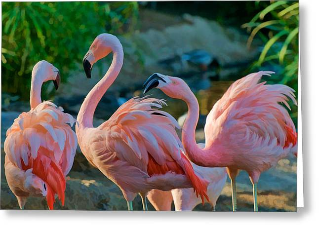 Three Pink Flamingos Strutting Their Stuff Greeting Card