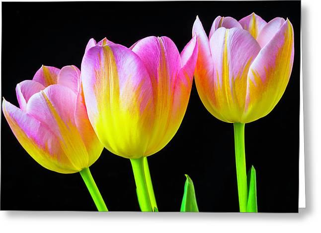 Three Pink Yellow Tulips Greeting Card