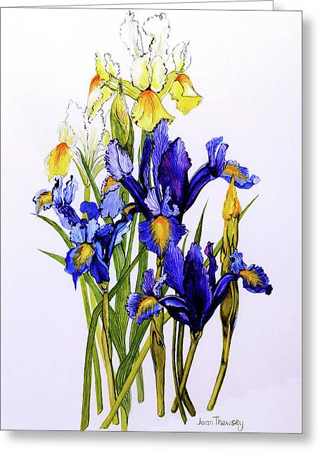 Three Purple And Two Yellow Iris With Buds Greeting Card by Joan Thewsey