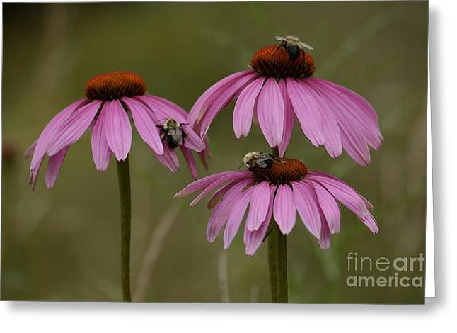 Greeting Card featuring the photograph Three by Randy Bodkins