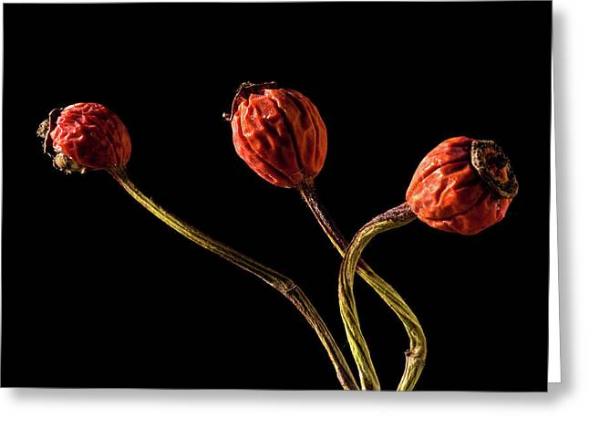 Three Rose Hips Greeting Card by  Onyonet  Photo Studios