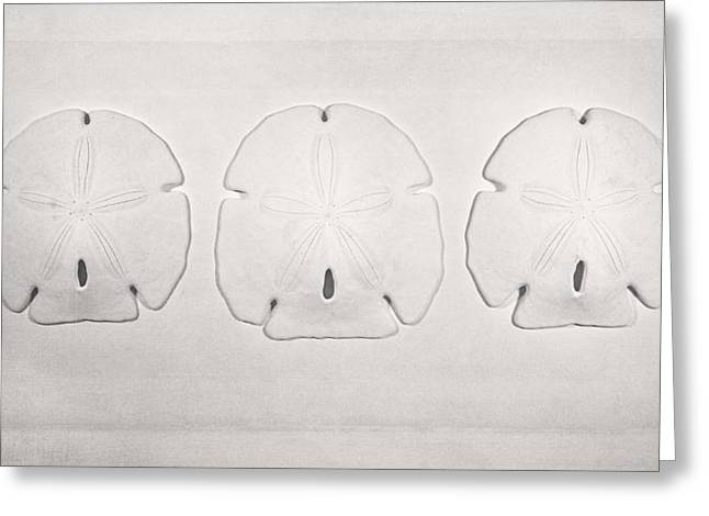 Three Sand Dollars Greeting Card by Scott Norris