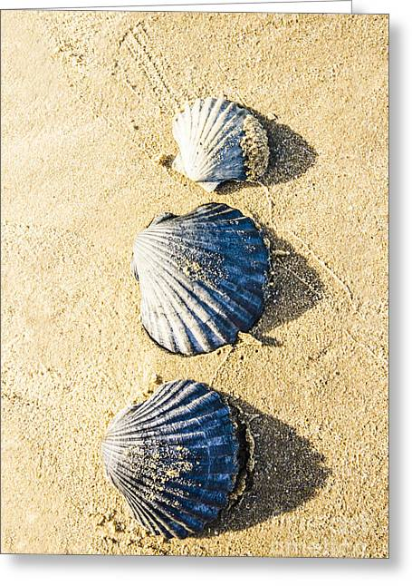 Three Scallop Shells Greeting Card by Jorgo Photography - Wall Art Gallery