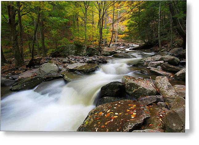 Three Seconds In Fall Greeting Card by Neil Shapiro