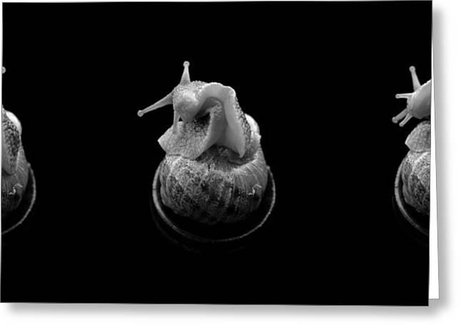 Three Snails Greeting Card