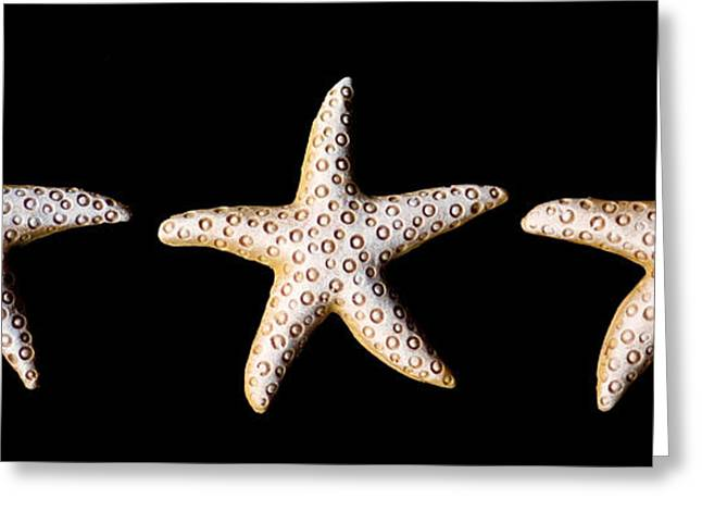 Three Stars - Sepia Greeting Card by Zoe Ferrie