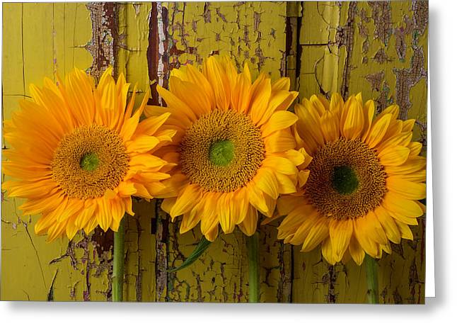 Three Sunflowers Against Old Wall Greeting Card by Garry Gay