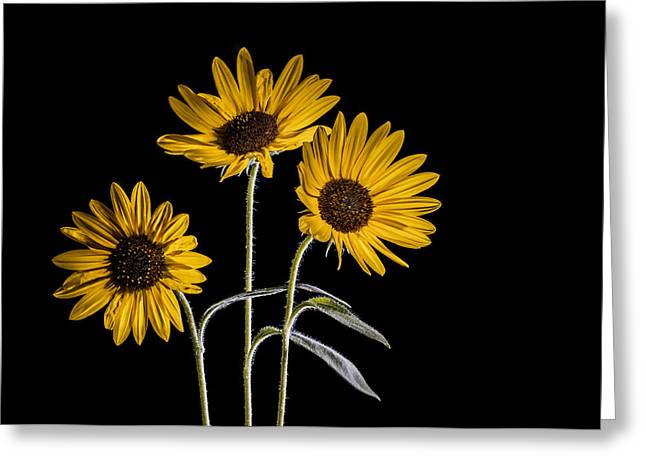 Three Sunflowers Light Painted On Black Greeting Card by Vishwanath Bhat