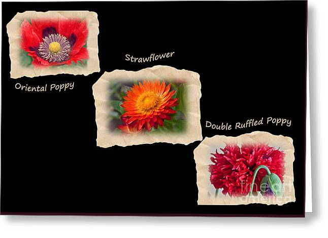 Greeting Card featuring the photograph Three Tattered Tiles Of Red Flowers On Black by Valerie Garner
