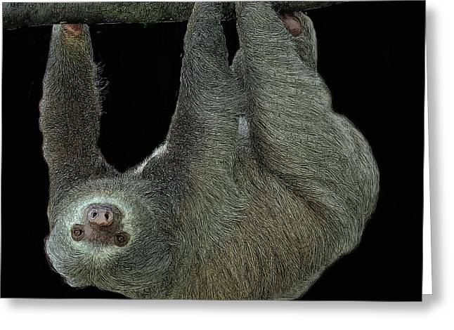 Three-toed Sloth Greeting Card