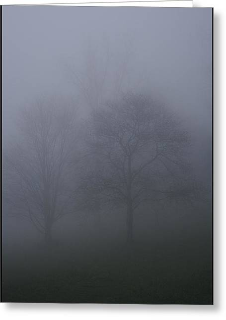 Three Trees In Fog Mount Dandenong Greeting Card by Werner Hammerstingl
