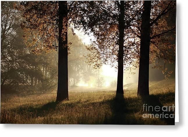 Three Trees Greeting Card by Jana Behr