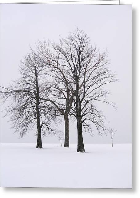 Three Trees Greeting Card