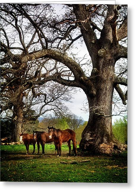 Three Under A Tree Greeting Card by Greg Mimbs