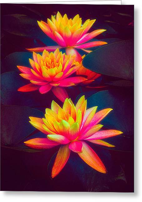 Greeting Card featuring the photograph Three Waterlilies by Chris Lord