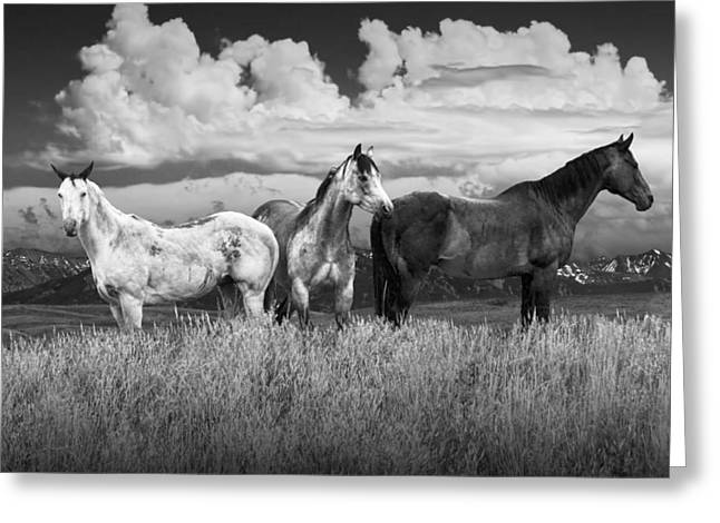 Three Western Horses In Black And White Greeting Card by Randall Nyhof