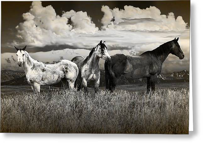 Three Western Horses In Sepia Tone Greeting Card by Randall Nyhof