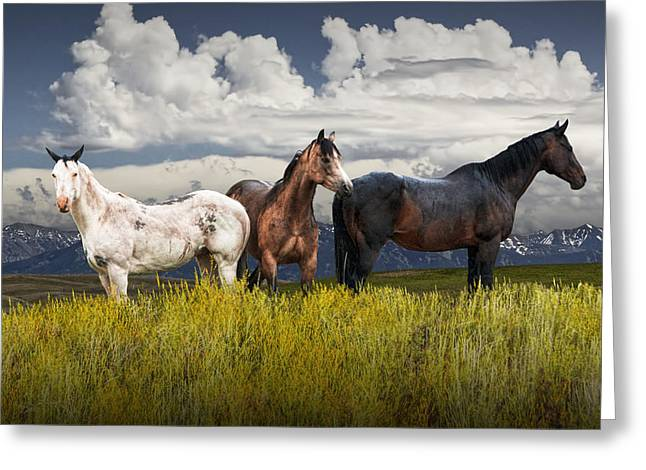 Three Western Horses Greeting Card by Randall Nyhof