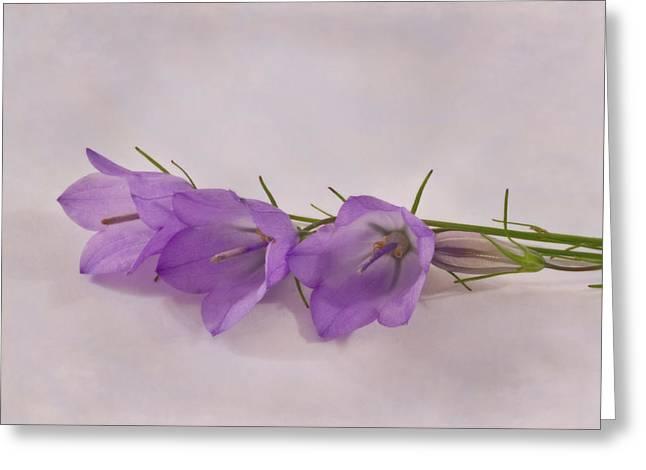 Three Wild Campanella Blossoms - Macro Greeting Card