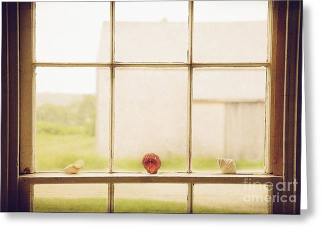 Three Window Shells Greeting Card by Craig J Satterlee
